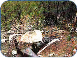 Bomber Crash Site Image